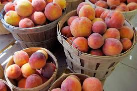 Cover photo for Sandhills Peach Harvest Report August 5-11, 2017