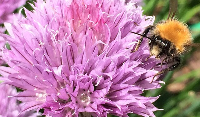 Bee getting nectar from flower.
