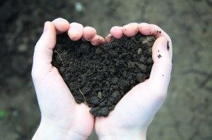 Cover photo for Using Previous Soil Test for Yards & Home Gardens