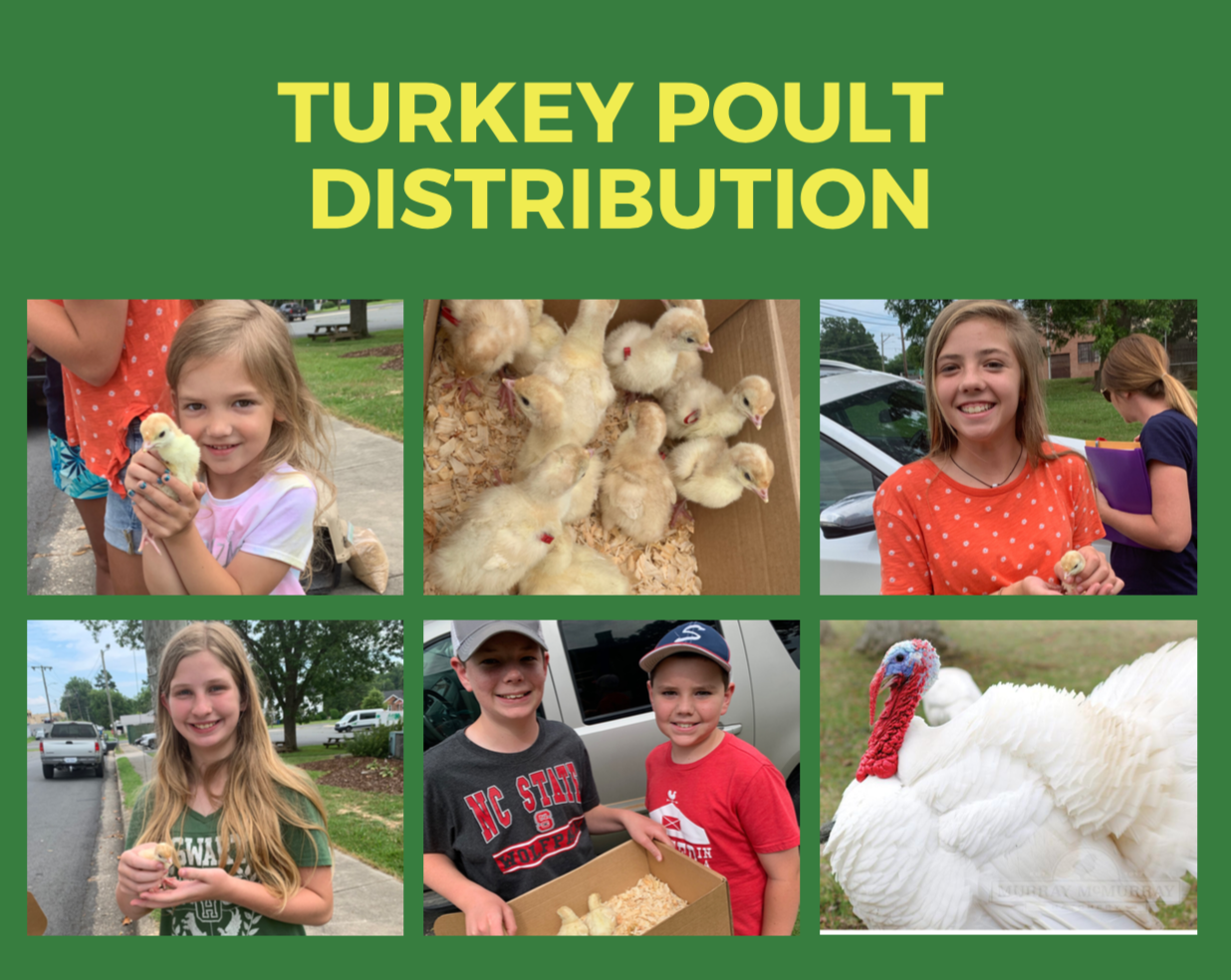 Turkey Poult Distribution