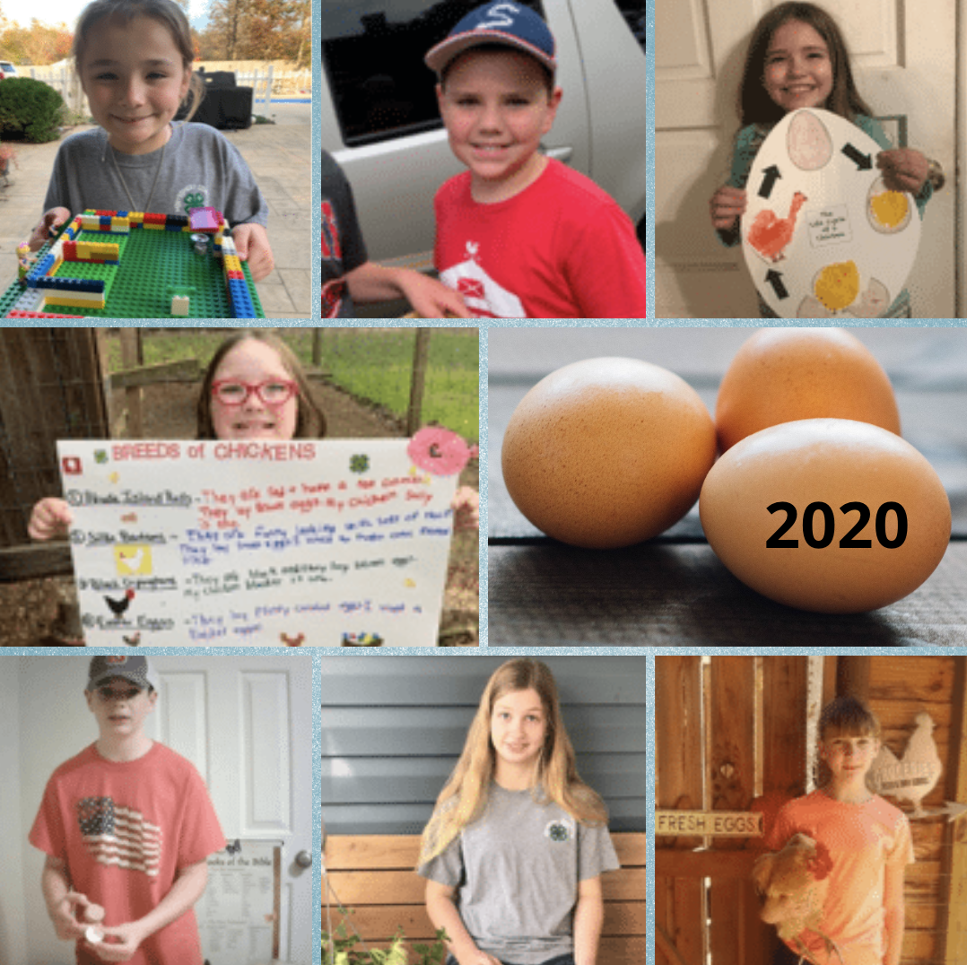 Egg Contest Participants